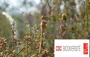 CDC Biodiversité